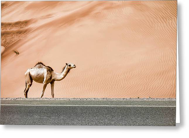Camels Greeting Cards - Desert Camel Greeting Card by Sedef Isik