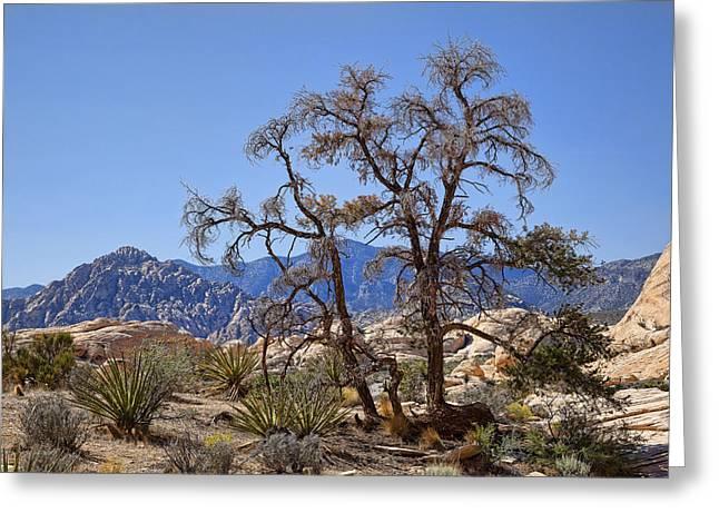Desert Contrast Greeting Card by Kelley King