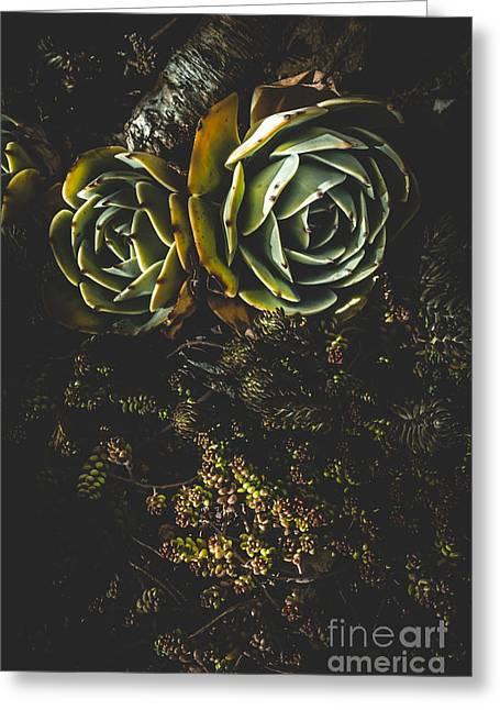 Desert Flowers Greeting Card by Jorgo Photography - Wall Art Gallery