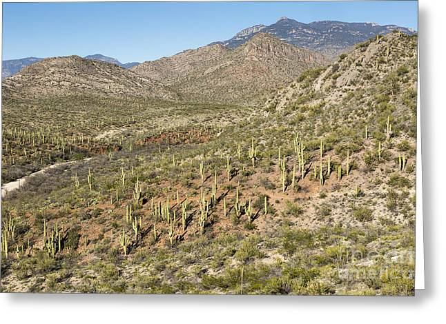 Rincon Greeting Cards - Desert Mountains Greeting Card by Mike Cavaroc