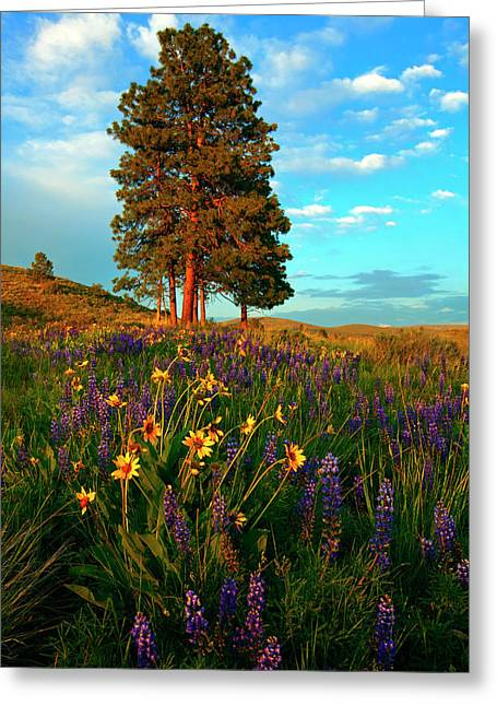 Ponderosa Pine Greeting Cards - Desert Pines Meadow Greeting Card by Mike  Dawson