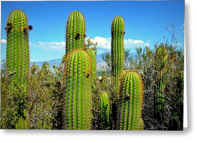 Desert Plants - All In The Family Greeting Card by Glenn McCarthy