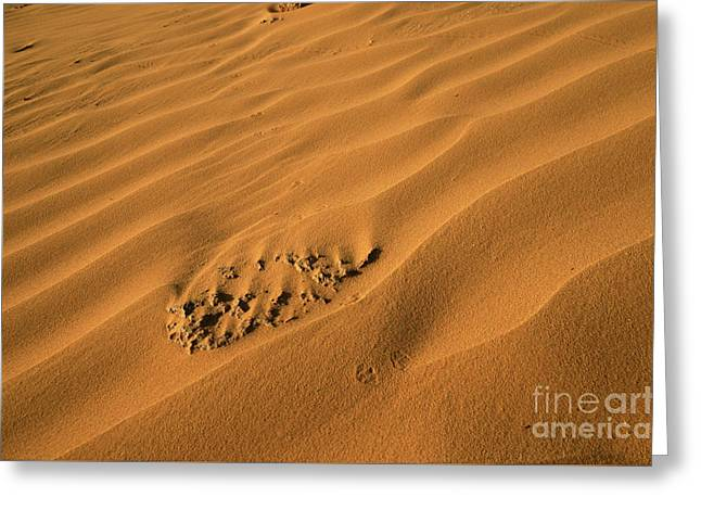 Desert Sand Dunes.  Greeting Card by Efraim Bar