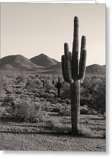 Carefree Cowboy Greeting Cards - Desert Solitude Greeting Card by Gordon Beck