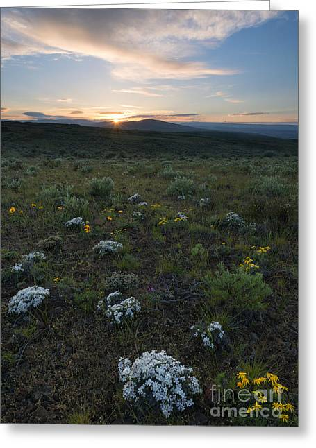 Phlox Greeting Cards - Desert Sunburst Greeting Card by Mike Dawson