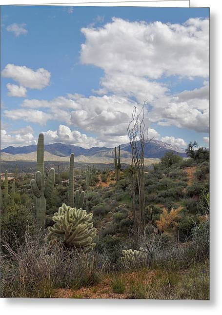 Cave Creek Western Greeting Cards - Desert Vista Greeting Card by Gordon Beck