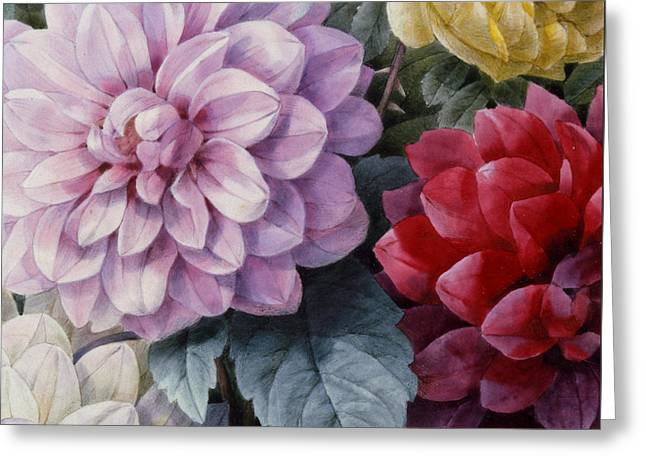 Violet Art Greeting Cards - Detail of Dahlias and Roses Greeting Card by Camille de Chantereine