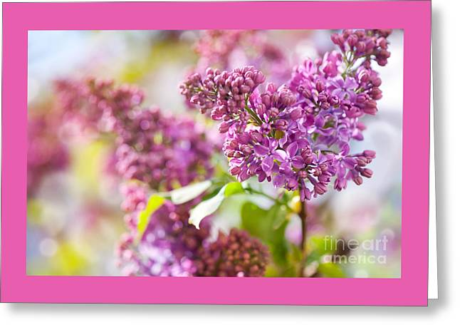 Flower Blossom Greeting Cards - Detail of pink Syringa vulgaris or lilac flowers  Greeting Card by Arletta Cwalina