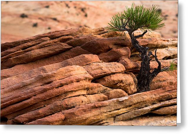 Growing Out Of Rock Greeting Cards - Determination Greeting Card by John Daly