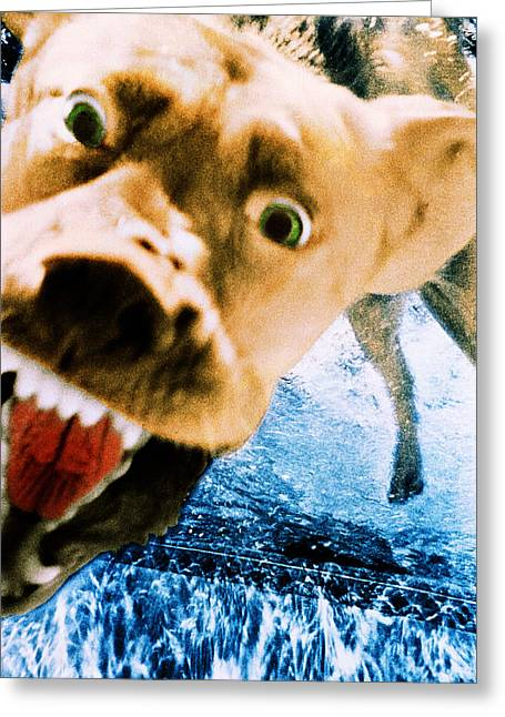 Golden Lab Greeting Cards - Devil Dog Underwater Greeting Card by Jill Reger