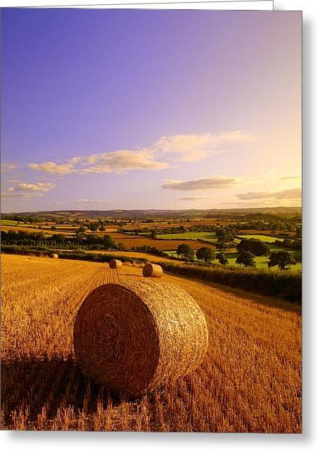 Harvest Greeting Cards - Devon Haybales Greeting Card by Neil Buchan-Grant