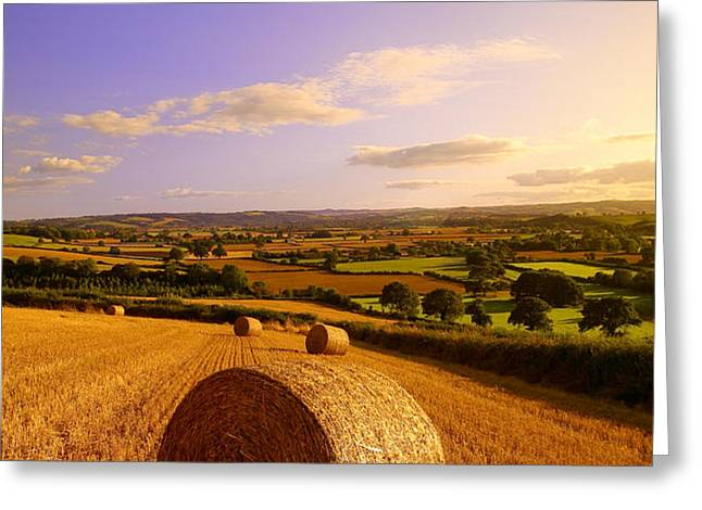 Devon Haybales Greeting Card by Neil Buchan-Grant