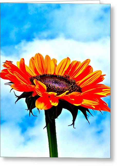 Photographs Of Flowers Greeting Cards - Devotion Greeting Card by Gwyn Newcombe