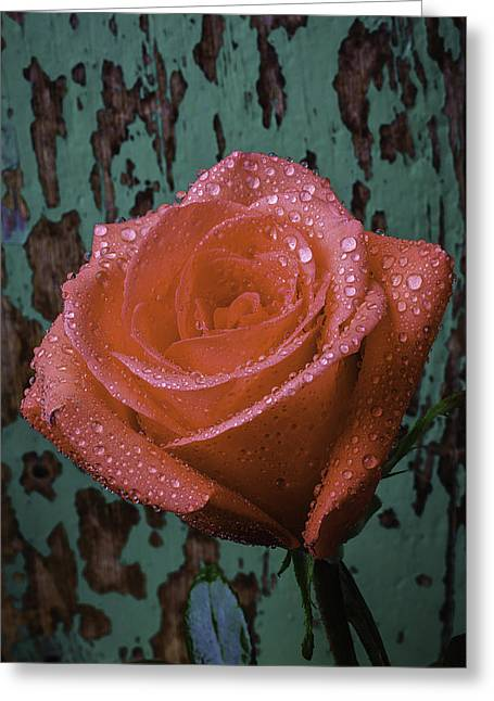 Wet Rose Greeting Cards - Dew Covered Rose Greeting Card by Garry Gay