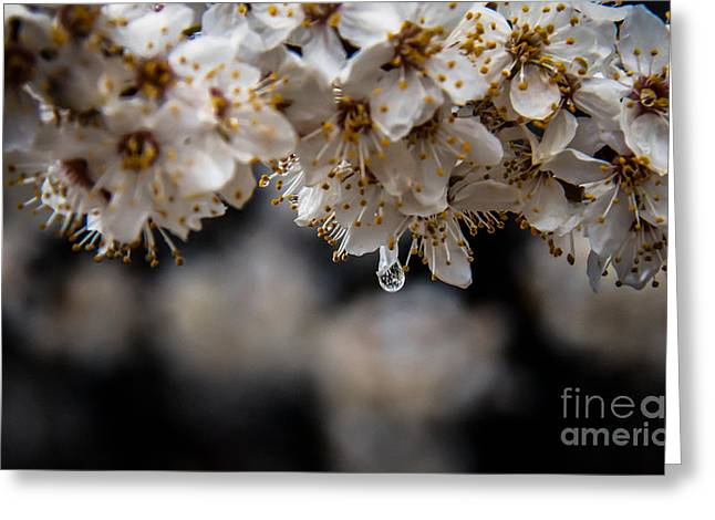Bale Greeting Cards - Dew Drop Greeting Card by Robert Bales