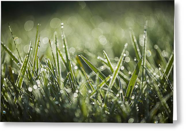 Backlit Greeting Cards - Dew Glistens On The Grass  Astoria Greeting Card by Robert L. Potts