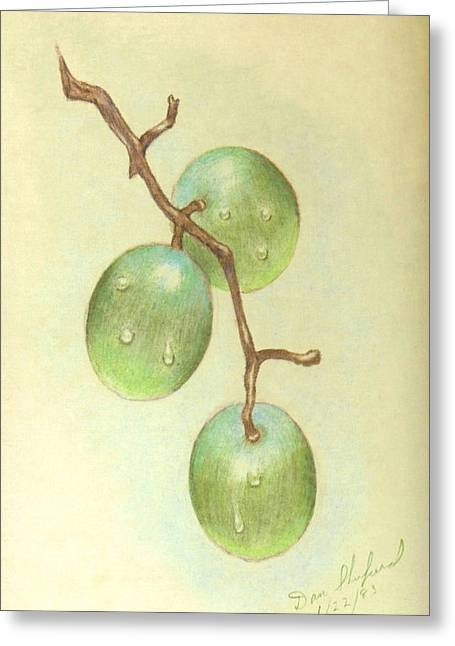 Grape Vine Drawings Greeting Cards - Dew on White Grapes Greeting Card by Daniel Shuford