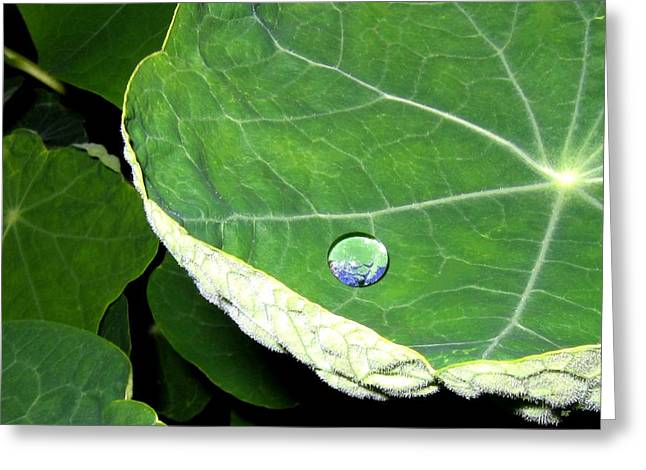 Dewdrops Greeting Cards - Dewdrop Greeting Card by Will Borden