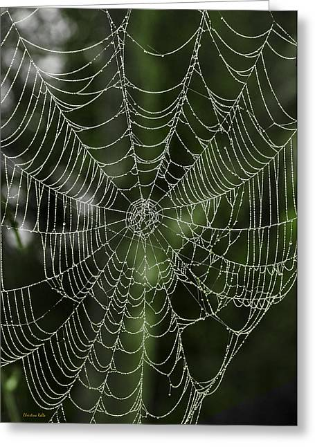 Dewy Spider Web Greeting Card by Christina Rollo