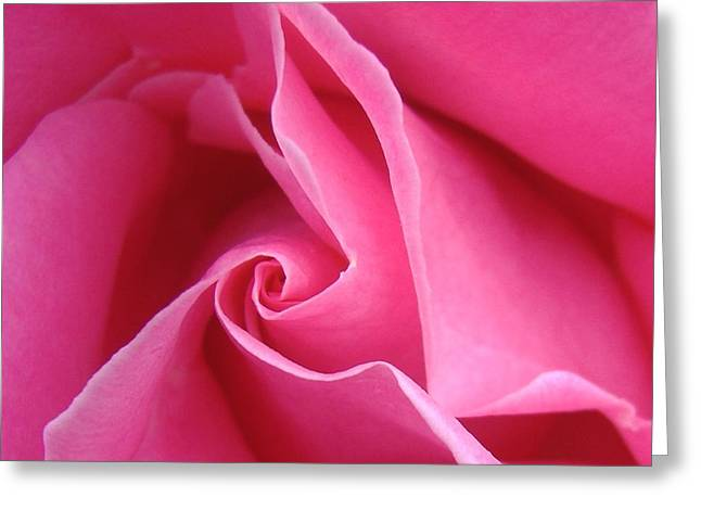 Pink Roses Greeting Cards - Diagonal of Rose Greeting Card by Jacqueline Migell