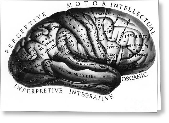 Science Collection - Greeting Cards - Diagram Of Brain Functions Greeting Card by Omikron