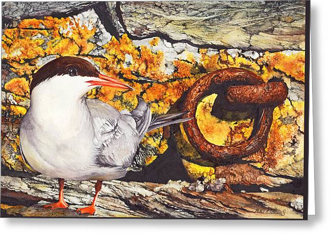 Tern Greeting Cards - Diamonds and Rust Greeting Card by Peter Williams