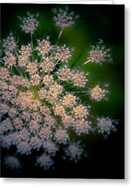 Diamonds Are Forever Greeting Card by Loriental Photography