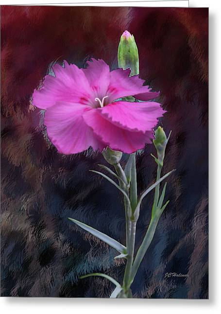 Halinar Greeting Cards - Dianthus in Love Greeting Card by Joe Halinar