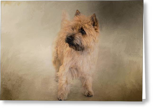 Cairn Terrier Greeting Cards - Did I Hear You Say WALK - Cairn Terrier Greeting Card by Jai Johnson