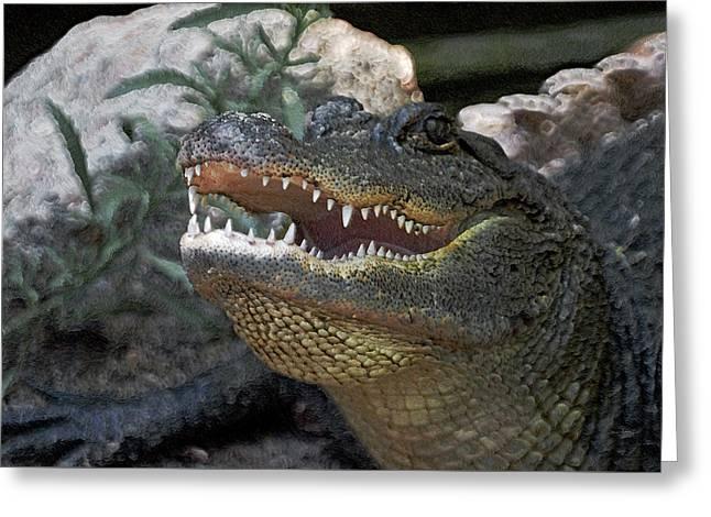 American Alligator Greeting Cards - Did You Say Run Greeting Card by Ernie Echols