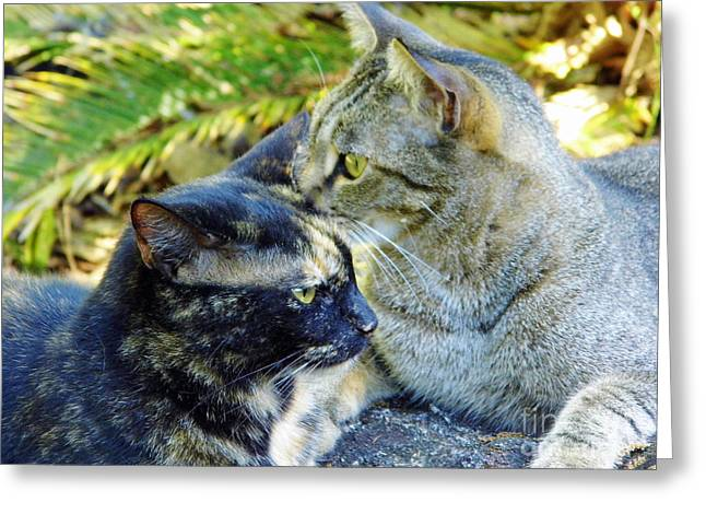 House Pet Greeting Cards - Different Directions Greeting Card by D Hackett