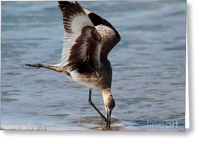 Feeding Birds Greeting Cards - Digging For Dinner Greeting Card by Adam Jewell