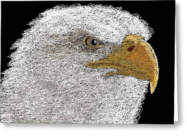 Hand Drawn Greeting Cards - Digital Scribble - Bald Eagle Greeting Card by Nathan Shegrud