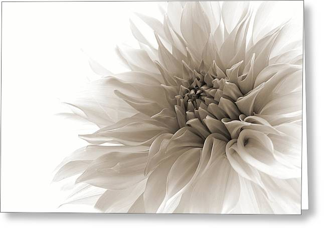 Dahlias Greeting Cards - Dignified Greeting Card by Priska Wettstein