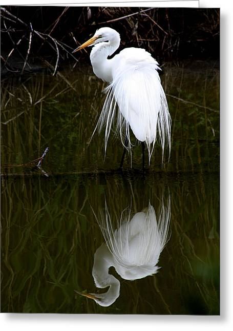 Wildlife Refuge. Greeting Cards - Dimensions Greeting Card by Captain Debbie Ritter