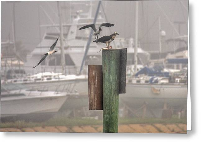 Schooner Greeting Cards - Dinner for Three Greeting Card by Bo Lamey