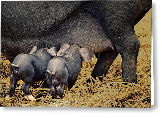Piglets Greeting Cards - Dinner for Two Greeting Card by Soul Full Sanctuary Photography By Tania Richley