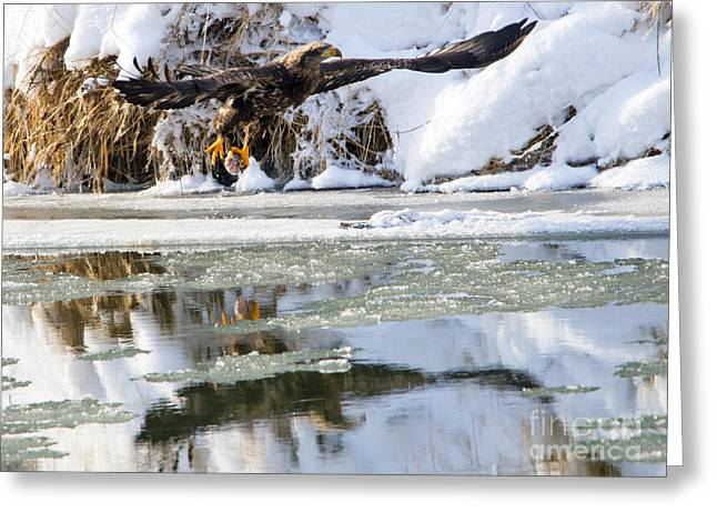 Dinner On Ice Greeting Card by Mike Dawson