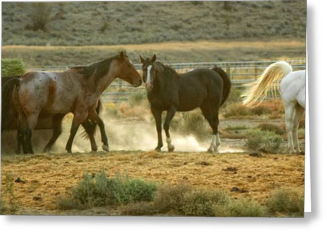 Brown Horse Photographs Greeting Cards - Dinner Time Greeting Card by Donna Blackhall
