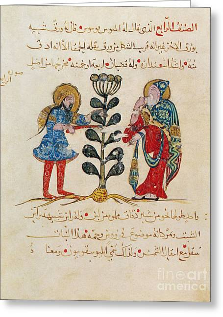Book Pages Greeting Cards - Dioscoridess De Materia Medica Greeting Card by Science Source