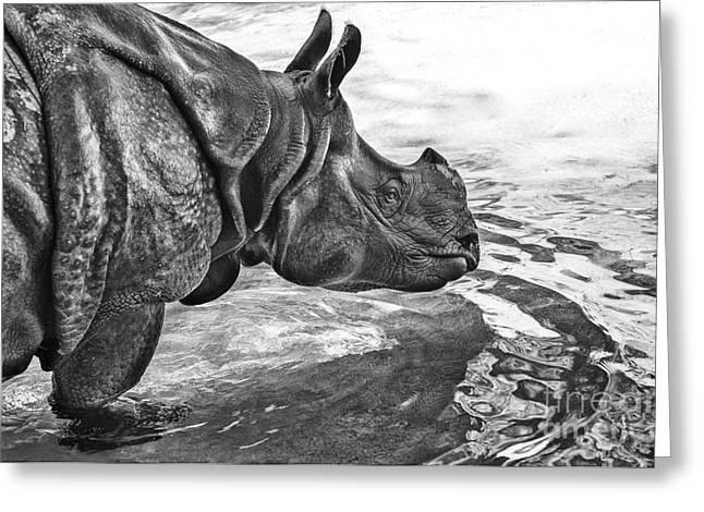 Rhinoceros Greeting Cards - Dip in the Pool Greeting Card by Jamie Pham