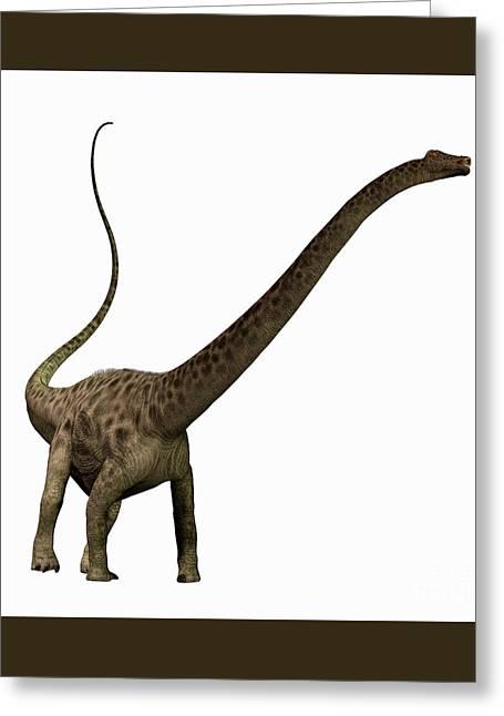 Diplodocus Digital Greeting Cards - Diplodocus Profile Greeting Card by Corey Ford