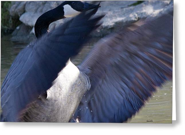 Geese Greeting Cards - Director Greeting Card by Betsy C  Knapp