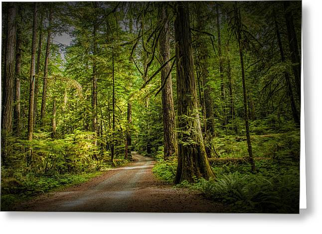 Dirt Road On Vancouver Island Greeting Card by Randall Nyhof