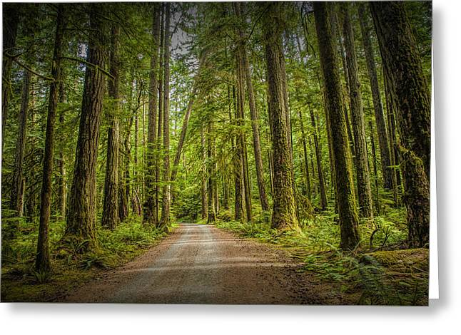 Dirt Road Through A Rain Forest On Vancouver Island Greeting Card by Randall Nyhof