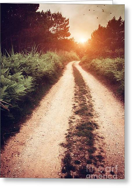 Deciduous Greeting Cards - Dirt Trail Greeting Card by Carlos Caetano
