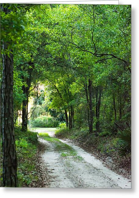 Jogging Greeting Cards - Dirt Trail Greeting Card by Shelby  Young