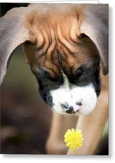 Puppies Photographs Greeting Cards - Discovery Greeting Card by Jeff Mize