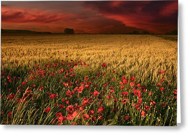 Field. Cloud Greeting Cards - Distant light Greeting Card by Radisa Zivkovic