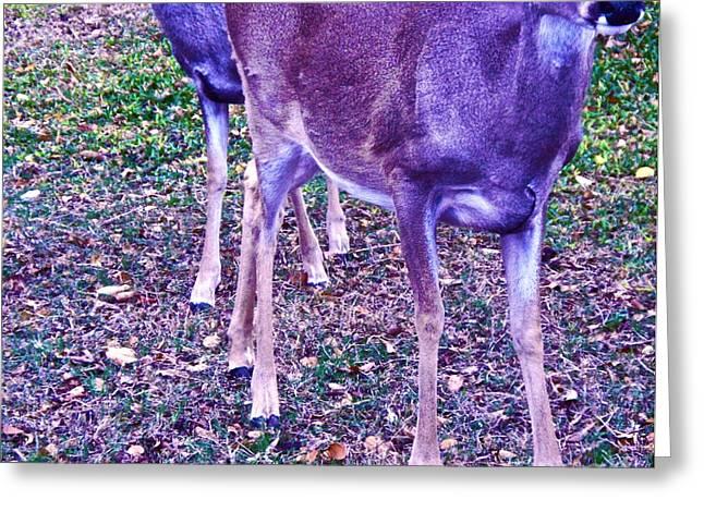 Two Deer Greeting Cards - Distrubing Deer Greeting Card by Chuck Taylor